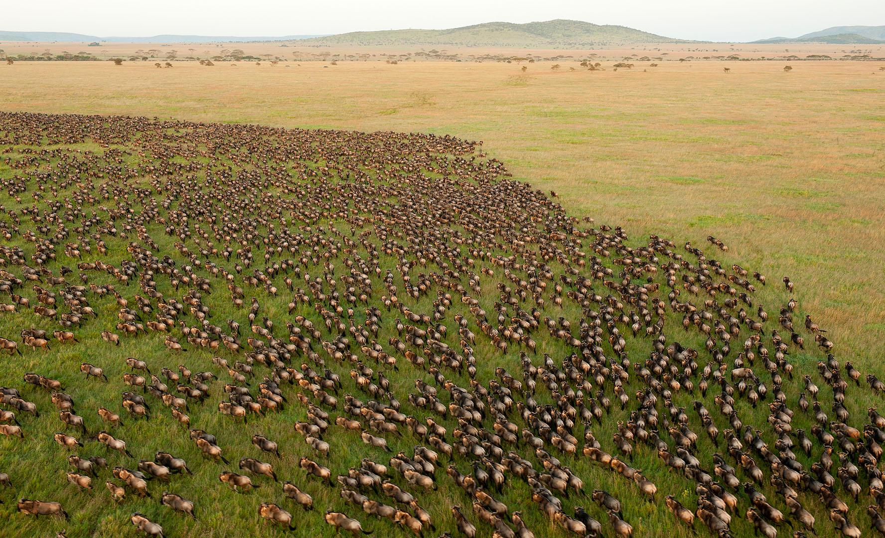 Los escenarios más espectaculares para verlos desde el cielo Serengeti_National_Park,_Tanzania