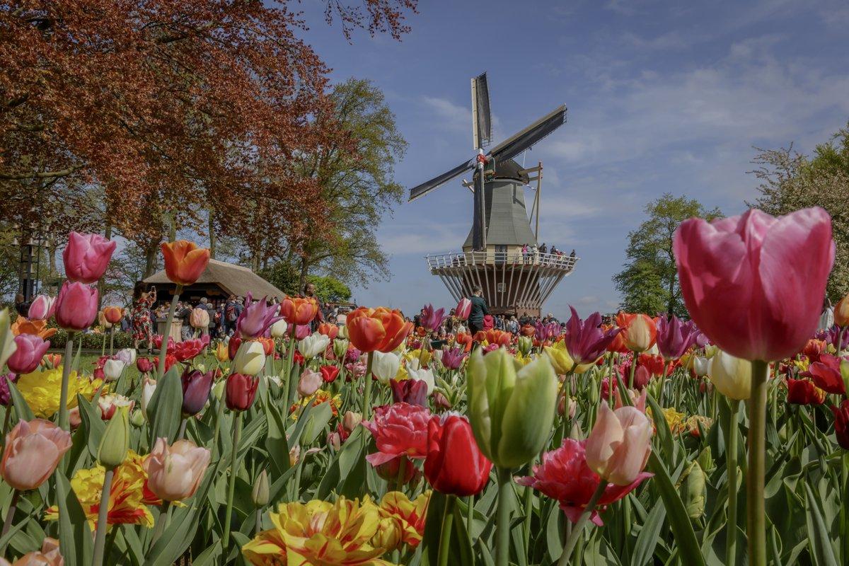 Los jardines más bellos del mundo Paises Bajos