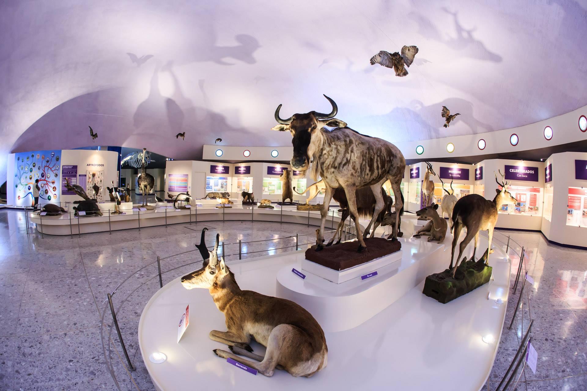 Los mejores museos de historia natural del mundo Museo de Historia Natural