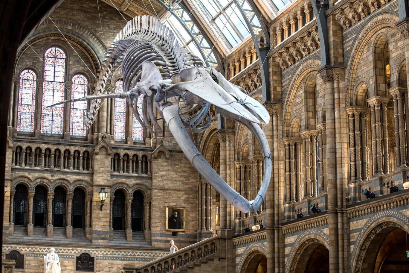 Los mejores museos de historia natural del mundo Natural History Museum
