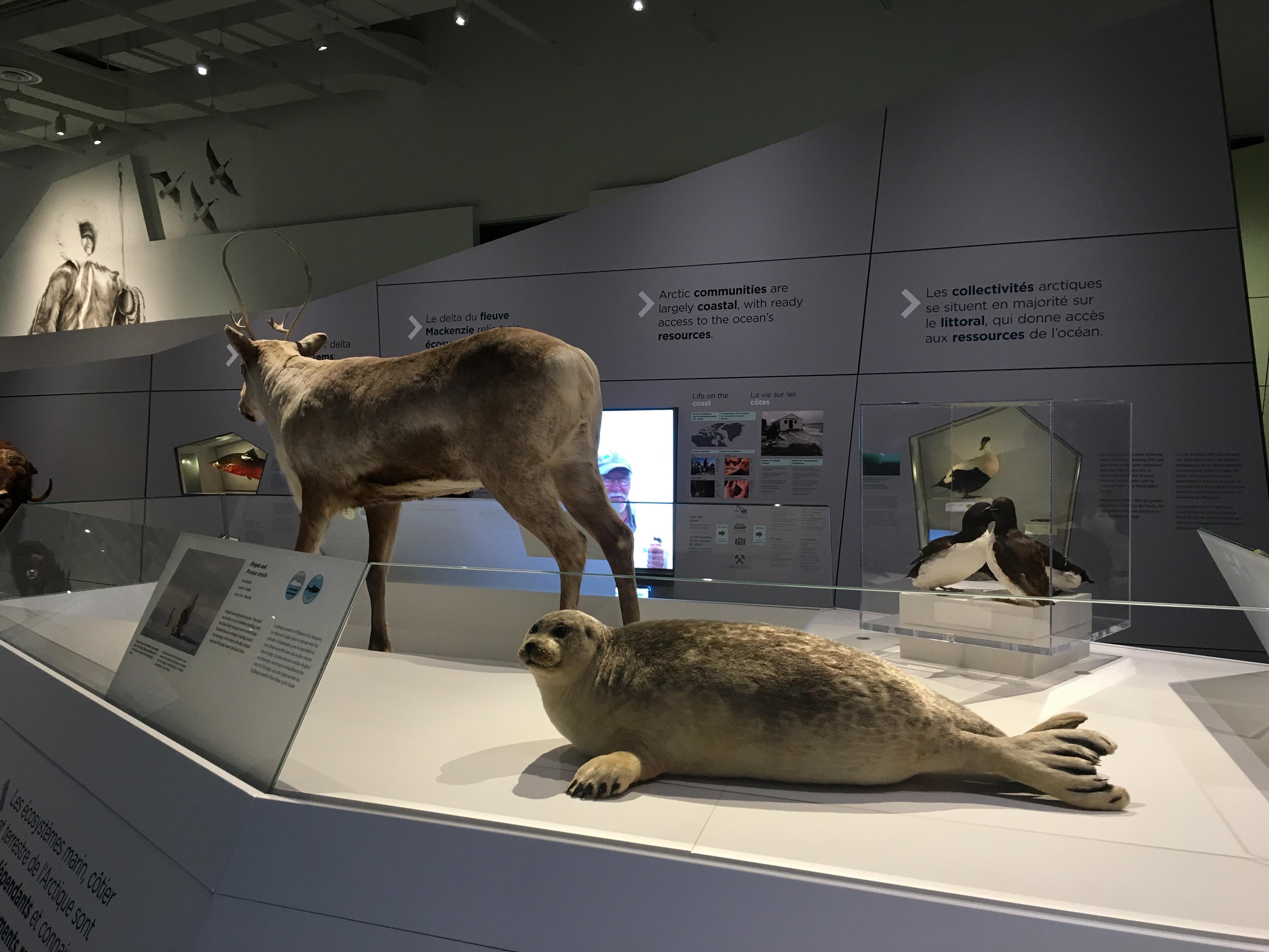 Los mejores museos de historia natural del mundo canadian museum of nature ottawa