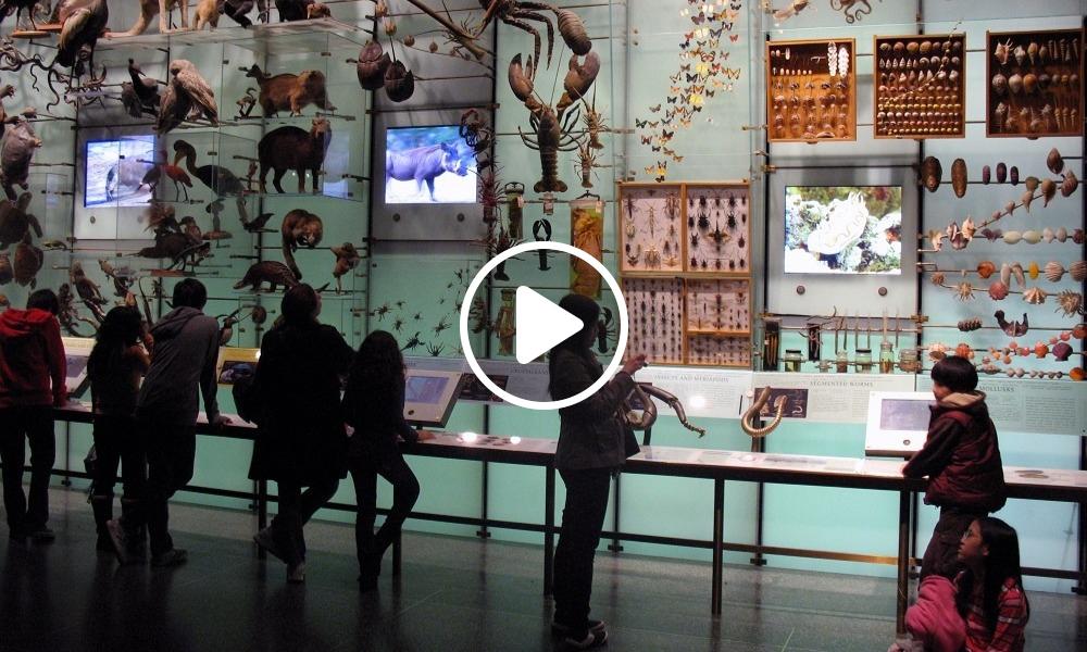 Los-mejores-museos-de-historia-natural