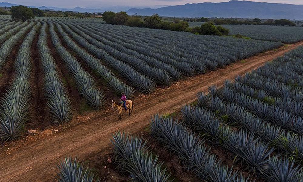 Resultado de imagen para tequila jalisco