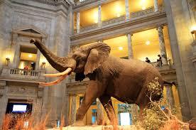 Museos importantes e imperdibles Nueva York1