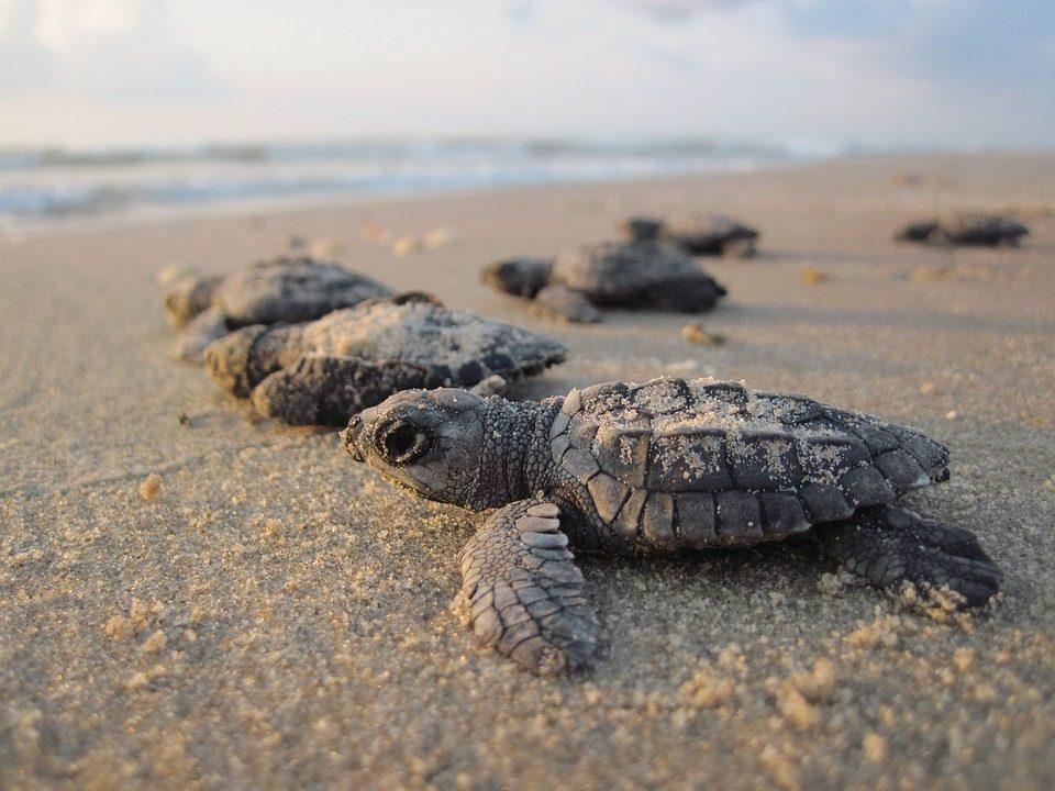 Playas para liberar tortugas