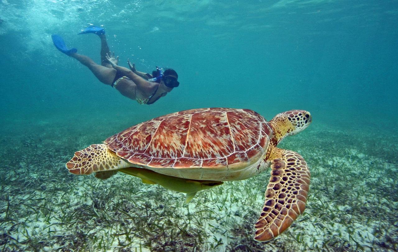 Qué hacer en Playa del Carmen, Quintana Roo Akulmal