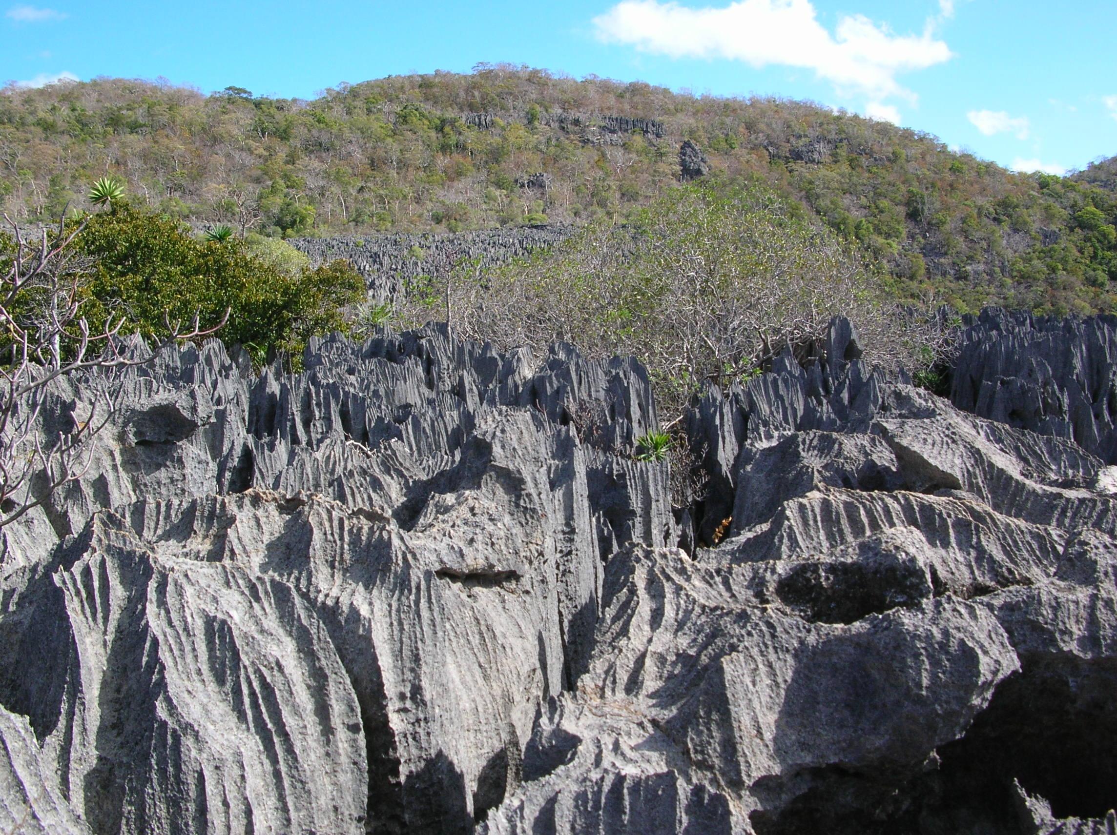 Sorprendentes paisajes petrificados Parque Nacional Tsingy de Bemaraha
