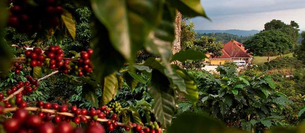 Viajes para celebrar tu despedida de soltero café Chiapas