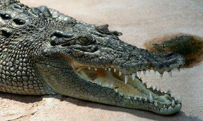 animales más peligrosos de Australia