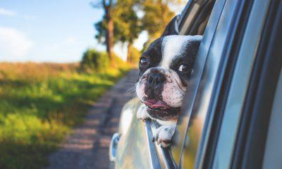 tips para viajar con mascotas