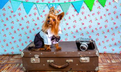Cuánto cuesta viajar en avión con un perro