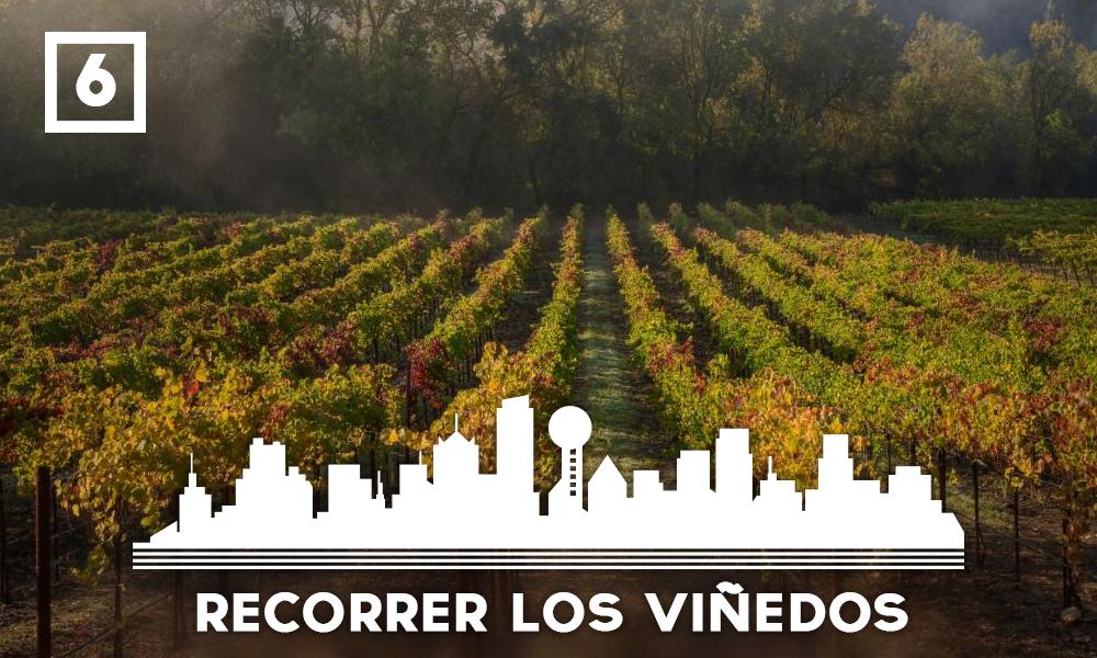 Las mejores cosas que hacer en Dallas - Recorrer los viñedos