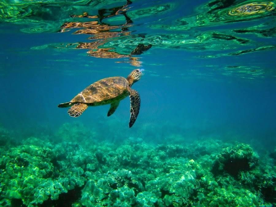 aventura-en-los-parques-nacionales-de-costa-rica-tortuguero