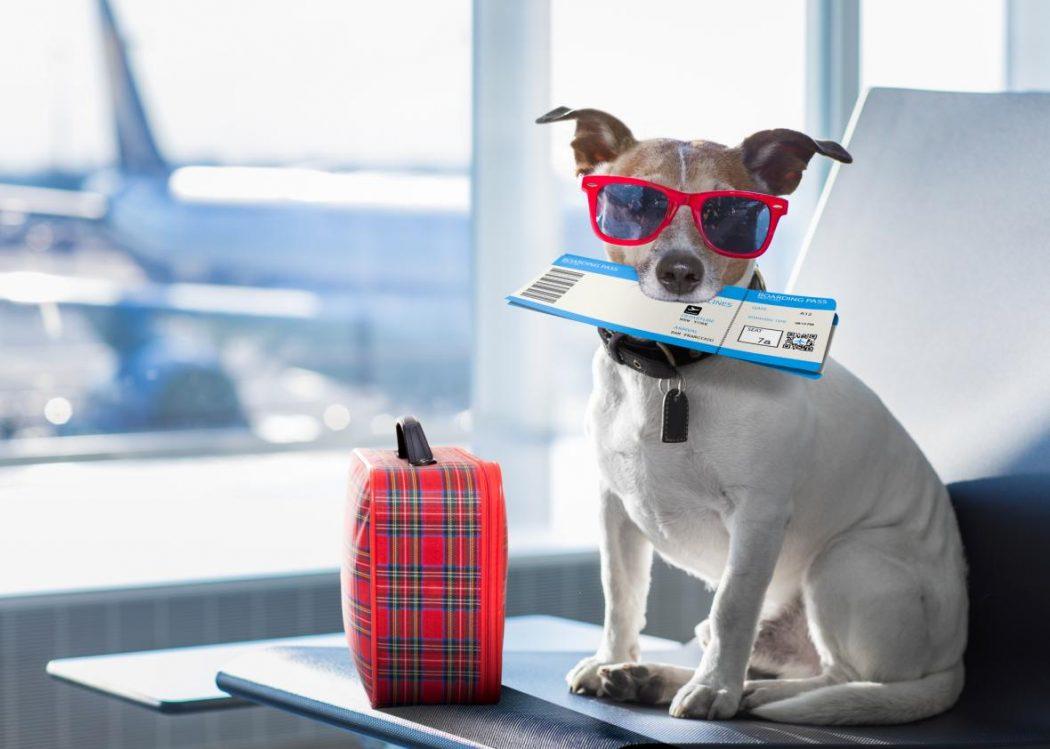 consejos para viajar en avión con tu mascota