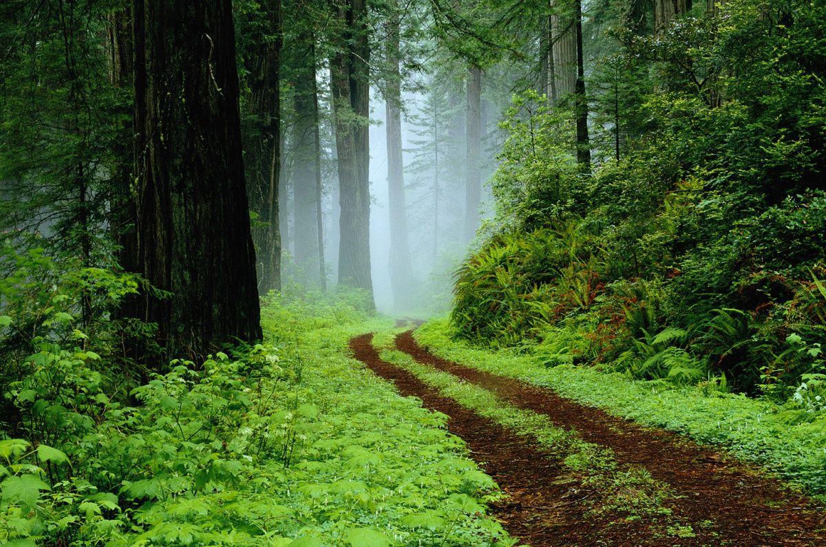 Escenarios de Star Wars que puedes visitar en el mundo Parque Nacional Redwood, California