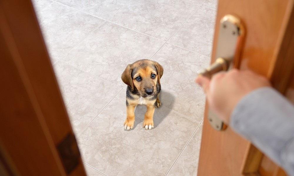 Dónde dejar a tu mascota cuando sales de viaje