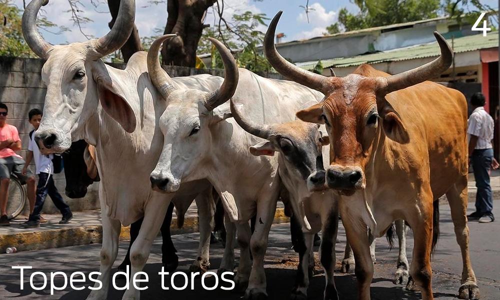 Que hacer en Liberia, Costa Rica, topes de toros