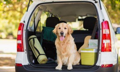 Accesoriospara viajar en auto con mascota