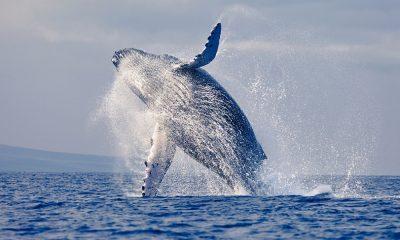 Los mejores lugares del mundo para ver ballenas
