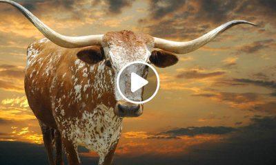 Qué hacer en Texas