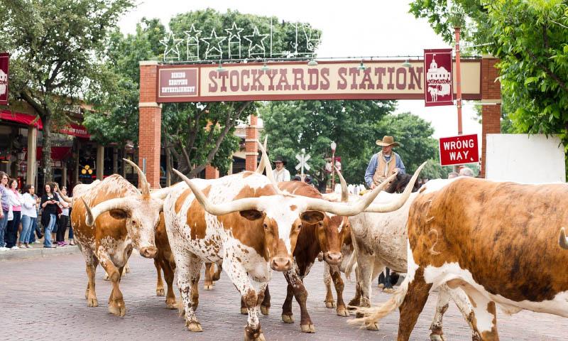 Las 40 Mejores Actividades Que Hacer En Texas Travel Report