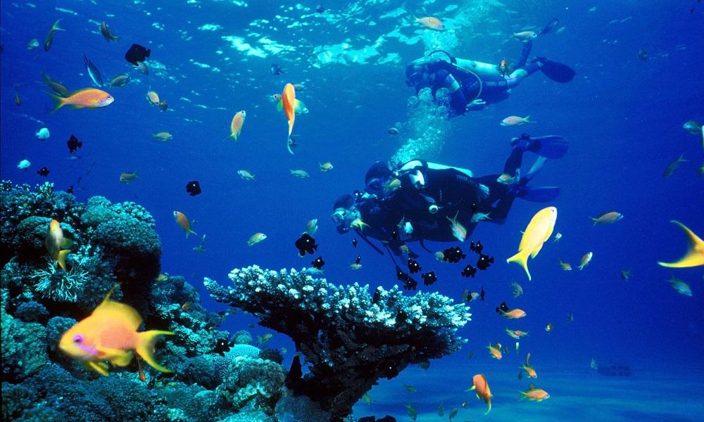 La aventura de bucear en el Mar Rojo
