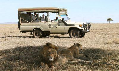 Los mejores safaris del mundo