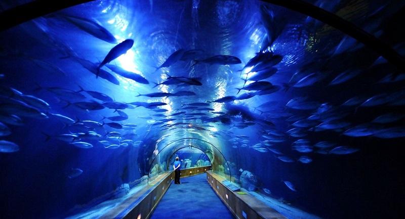 Самые впечатляющие туннели в мире
