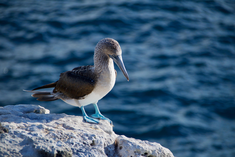 viajar-a-una-isla-galapagos