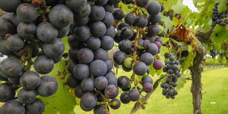 Любитель вина? Познакомьтесь с Finca Sala Viv#233; от Freixenet, в Кро