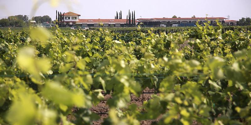 """Любитель вина?</p></div><p> Познакомьтесь с Finca Sala Viv#233; от Freixenet, в Кро"""" title=""""Любитель вина? Познакомьтесь с Finca Sala Viv#233; от Freixenet, в Кро""""/> Фото: Финка Сала Виве Если вы ищете что-то более интимное и особенное, ничего похожего на прогулку по виноградникам на карете.</p> <p> Опыт включает в себя все мероприятия и посещения классического тура, но добавляет дегустацию региональных сыров и дегустацию вин дома в Семейном заповеднике Феррер. Он рассчитывает около двух часов.</p> <p> Это занятие доступно только в определенные сезоны и праздники. </p> <div style="""