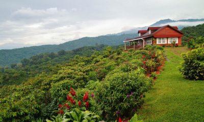 Cuánto cuesta la Ruta del Café en Chiapas