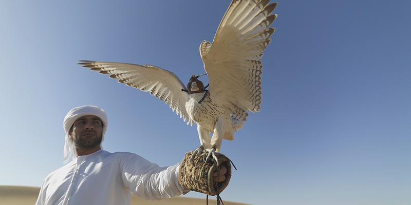 que hacer en los Emiratos Árabes