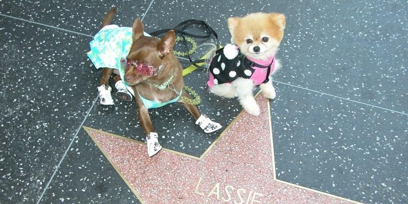 Las mejores cosas que hacer en Los Ángeles con mascotas