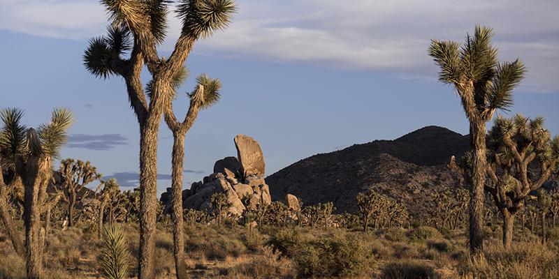 ores parques nacionales de Estados Unidos – Joshua Tree