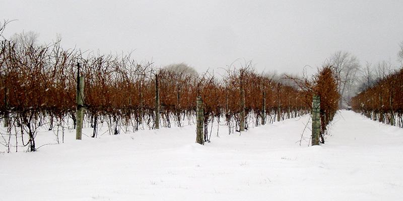 Ice Wine en Montreal