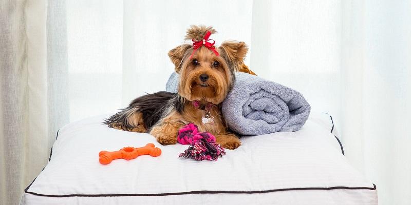 Hoteles que aceptan mascotas en Riviera Maya