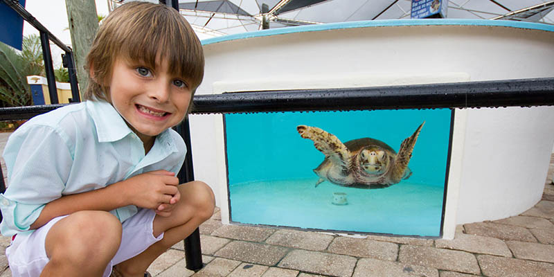 Aquí pueden ver tortugas