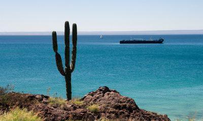 Descubre qué hacer en La Paz, Baja California Sur