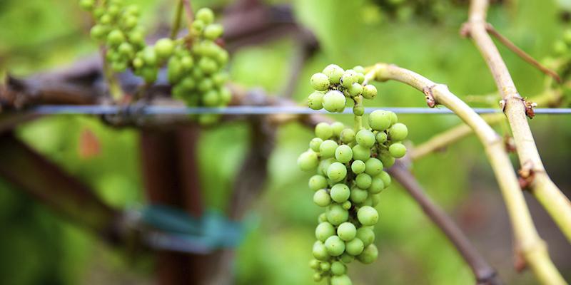 Mejores bodegas de vino de EUA