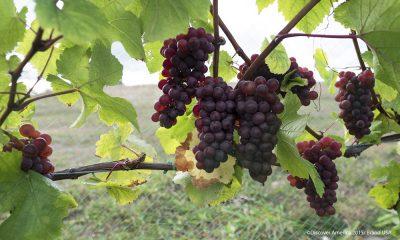Mejores viñedos de Estados Unidos