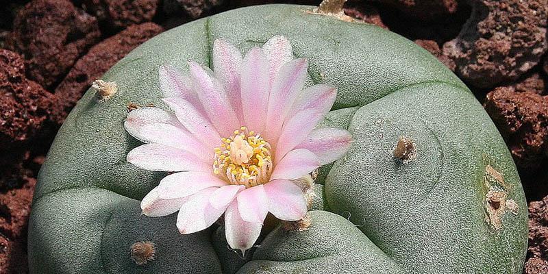 La flor que produce