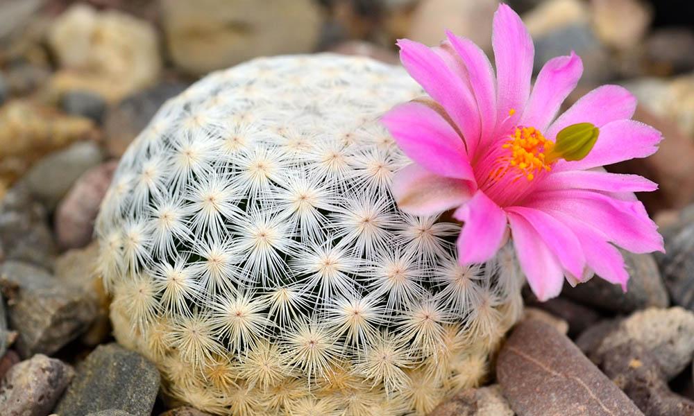 plantas-en-peligro-de-extincion
