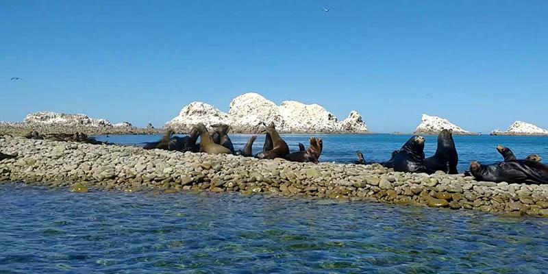 Isla San Jorge