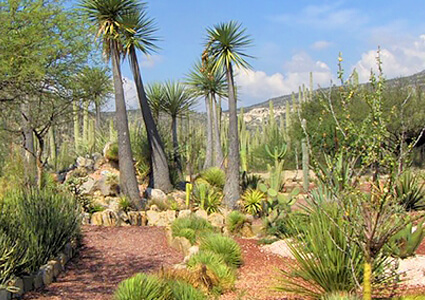 Jardín Botánico Helia Bravo Hollis