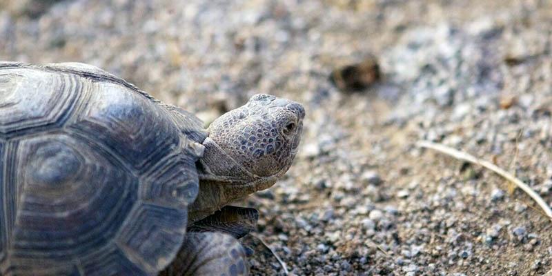 Especies de tortugas que solo habitan en esa parte de México