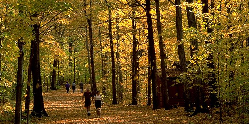 Montreal en otoño – Arboretum Morgan