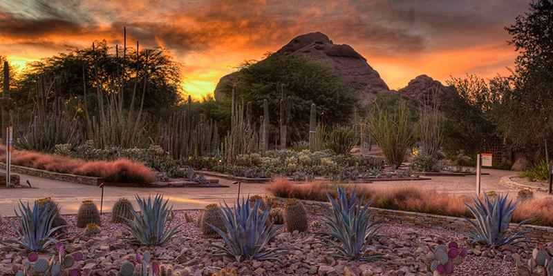 que-hacer-en-phoenix-arizona-desert-botanical-garden