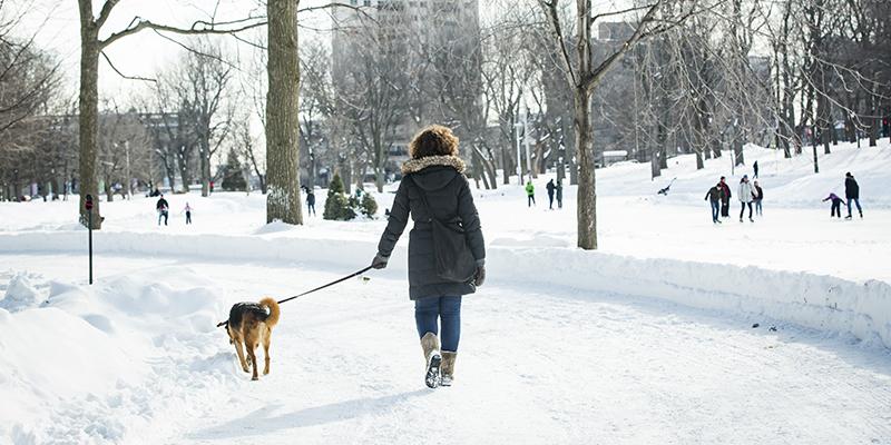 Pet friendly en Montreal