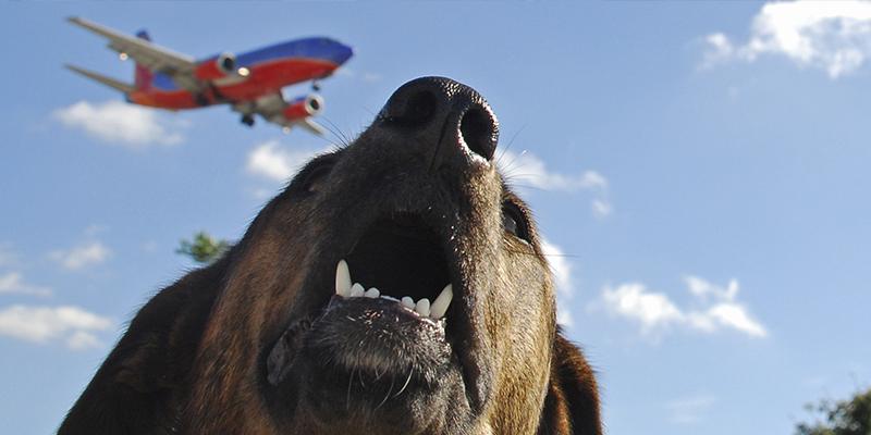 Cómo viajar con tu perro a Estados Unidos